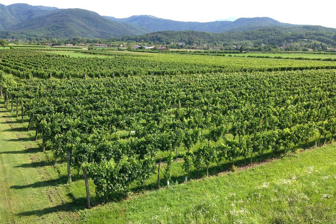 wine in Vittorio Veneto