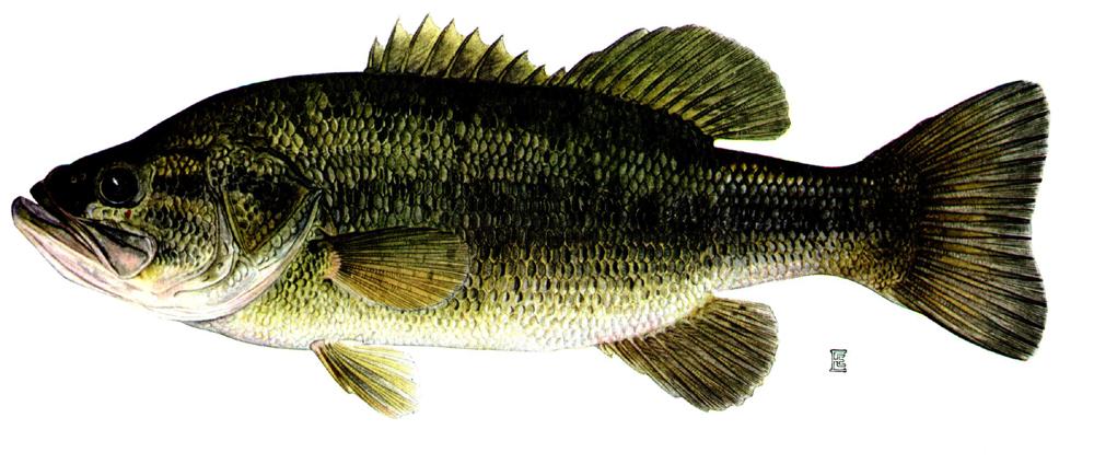 Fishing in Prosecco region