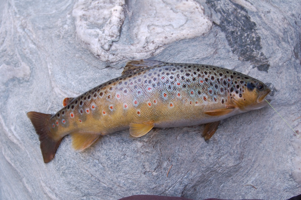 Fishing nearby Venice and Dolomites